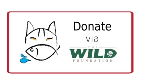 Find out how to donate and support the CAT in WATER fishing cat expedition